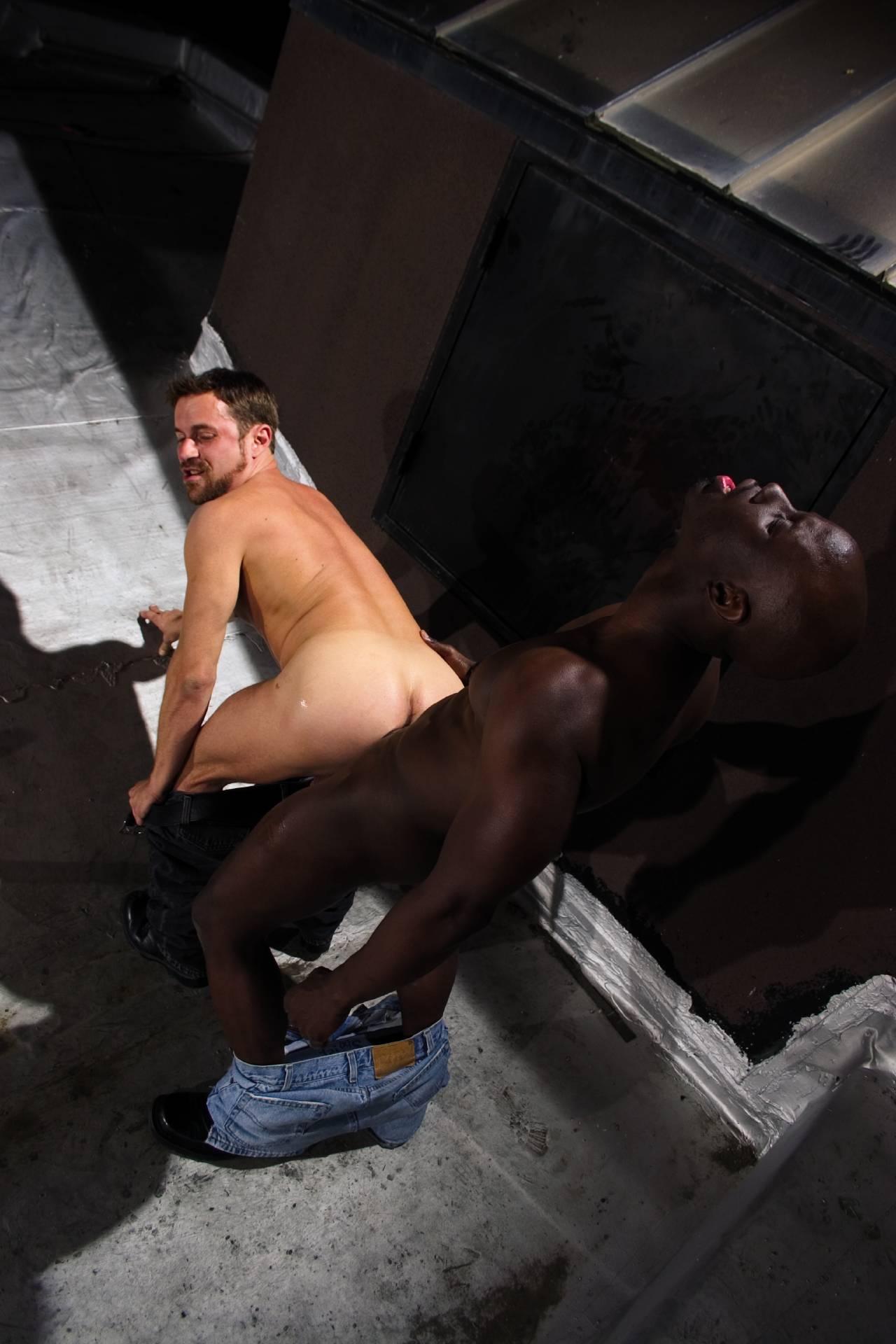 from Landry gay dreams 2 raging stallion